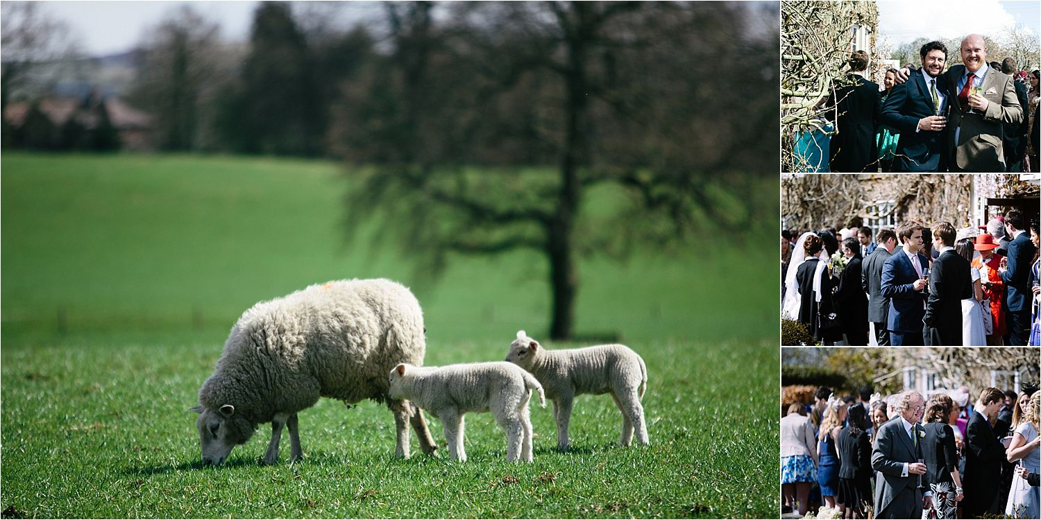 Spring lambs in the fields and guests at Cheshire wedding venue, Hilltop House