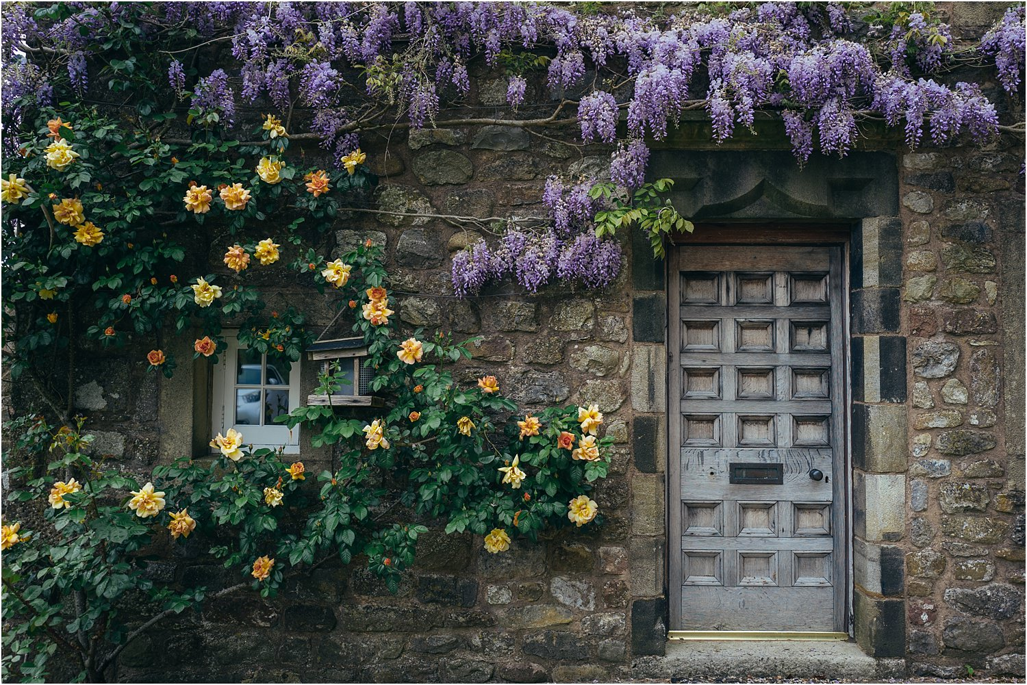 Wisteria and a climbing rose framing the door of Lancashire wedding venue the Inn at Whitewell