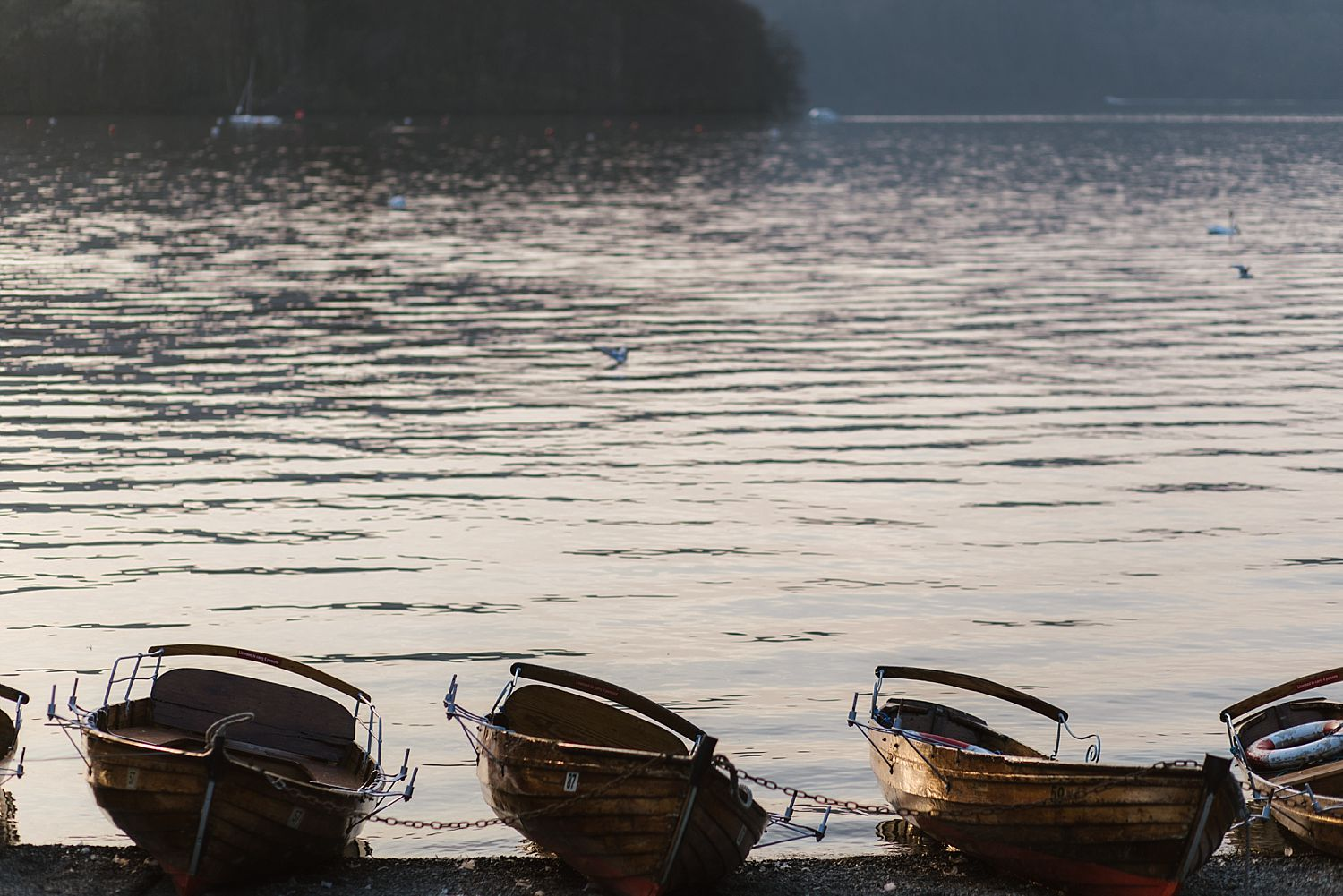 Evening view of rowing boats tied up on the side of Lake Windermere